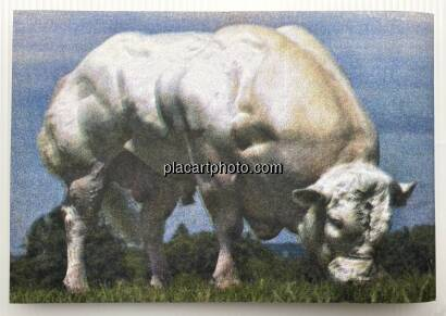 Collectif,BODY BUILDING BULLS (Edt of 100)